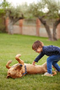 dog breeds for kids with autism